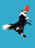 Dog-frisbee1. Dog jumpes for a frisbee disc at the blue sky background Stock Image
