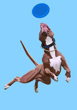 Dog-frisbee. Dog jumpes for a frisbee disc at the sky background Royalty Free Stock Image