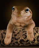Dog Frog Royalty Free Stock Photos