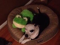 Dog and frog share a doggy bed Stock Images