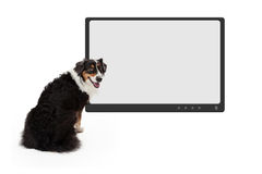 Dog In Front Of Blank Television Monitor Royalty Free Stock Photo