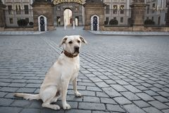Dog in front of the castle Stock Photography