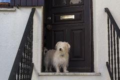 Dog at the front door of home