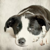 Dog in front on grunge background Royalty Free Stock Image