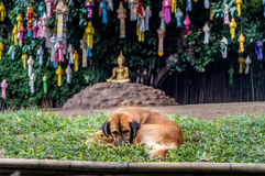 Dog in front of meditating Buddha with paper lamps Royalty Free Stock Photo