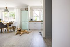 Dog in front of mint fridge in spacious interior with kitchen an. D chairs at dining table. Real photo concept royalty free stock photography