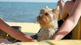 Dog in the front of a small boat. Dog home pet sails on a boat catamaran yacht on the ocean water to the sea stock video