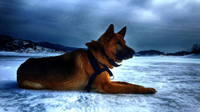 Dog on a frozen lake. A new model friend on frozen lake Stock Photos