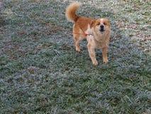 Dog frozen yard stock photography