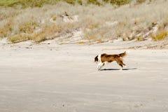 dog fun Στοκ Εικόνες