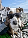 Dog. Fun pet sea glasses pets Royalty Free Stock Photography