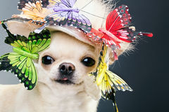 Dog in funny cap Stock Photography