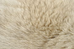 Dog fur. A full frame close-up of dog fur Stock Image