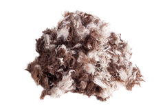 dog fur Royalty Free Stock Images