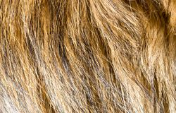 Dog fur as background. Photo of an abstract texture Royalty Free Stock Images