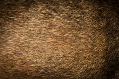Dog fur background Royalty Free Stock Photo