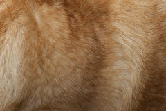 Dog Fur Stock Images