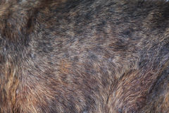 Dog fur Stock Photo