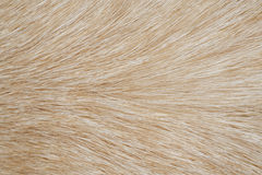 Dog fur close up as background. Royalty Free Stock Images