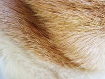 Dog fur (3) Royalty Free Stock Photos