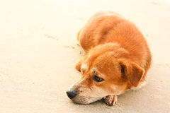 Dog. Fur is pretty lonely sleeping alone Royalty Free Stock Photography