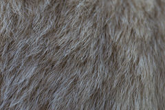 Dog fur texture. Abstract textures of close up on brown dog fur Royalty Free Stock Photo