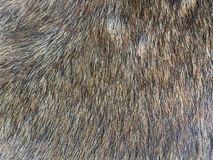 Dog fur texture. For background Stock Images