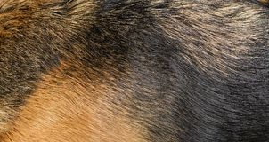 Dog fur texture Stock Images