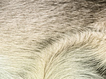 Dog fur (5) Royalty Free Stock Photo