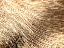 Dog fur Royalty Free Stock Photography