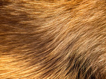Dog fur (12) Royalty Free Stock Photo