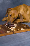 Dog on game Stock Images