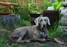 Dog in a garden Stock Image