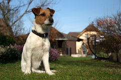 Dog in the garden Stock Photo