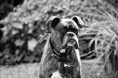 The dog. On the garden Royalty Free Stock Images