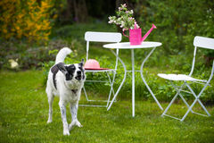 Dog in a garden Stock Photos