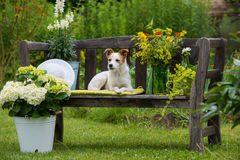Dog on garden bench. Dog lying on a garden bench royalty free stock image