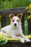 Dog on garden bench Stock Photography