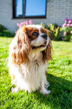 Dog in garden Royalty Free Stock Photography