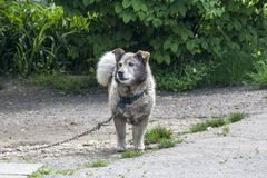 Dog in the garden. garden guard. royalty free stock image