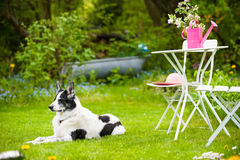 Dog in a garden Stock Images