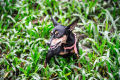 Dog in the garden royalty free stock image