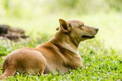 Dog in the garden Stock Photography