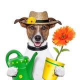 Dog gardener royalty free stock photography