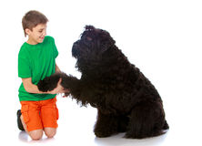 The dog gave his paw to the boy Stock Photo