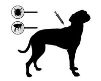 Dog gets an inoculation against fleas and ticks. On white