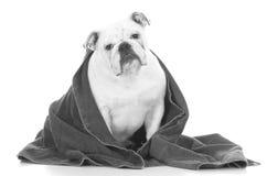Dog getting a bath Stock Photo