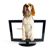 Dog getting out of the monitor. Dog getting out of the monitor , saved clipping path Stock Image