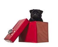Dog in a gift box Stock Photos