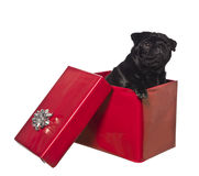 Dog in a gift box Stock Images